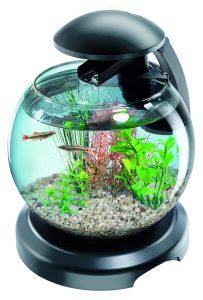 Aquarium Tetra Cascade Globe Noire