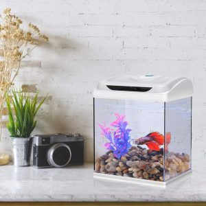 DADYPET Mini Aquarium Combattant