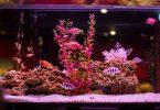 Meilleurs aquariums