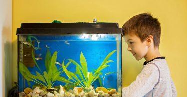 Meilleur chauffage aquarium