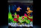 Meilleures rampes LED pour aquariums